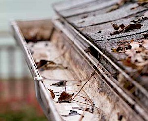 Gutter cleaning with County Garden Services